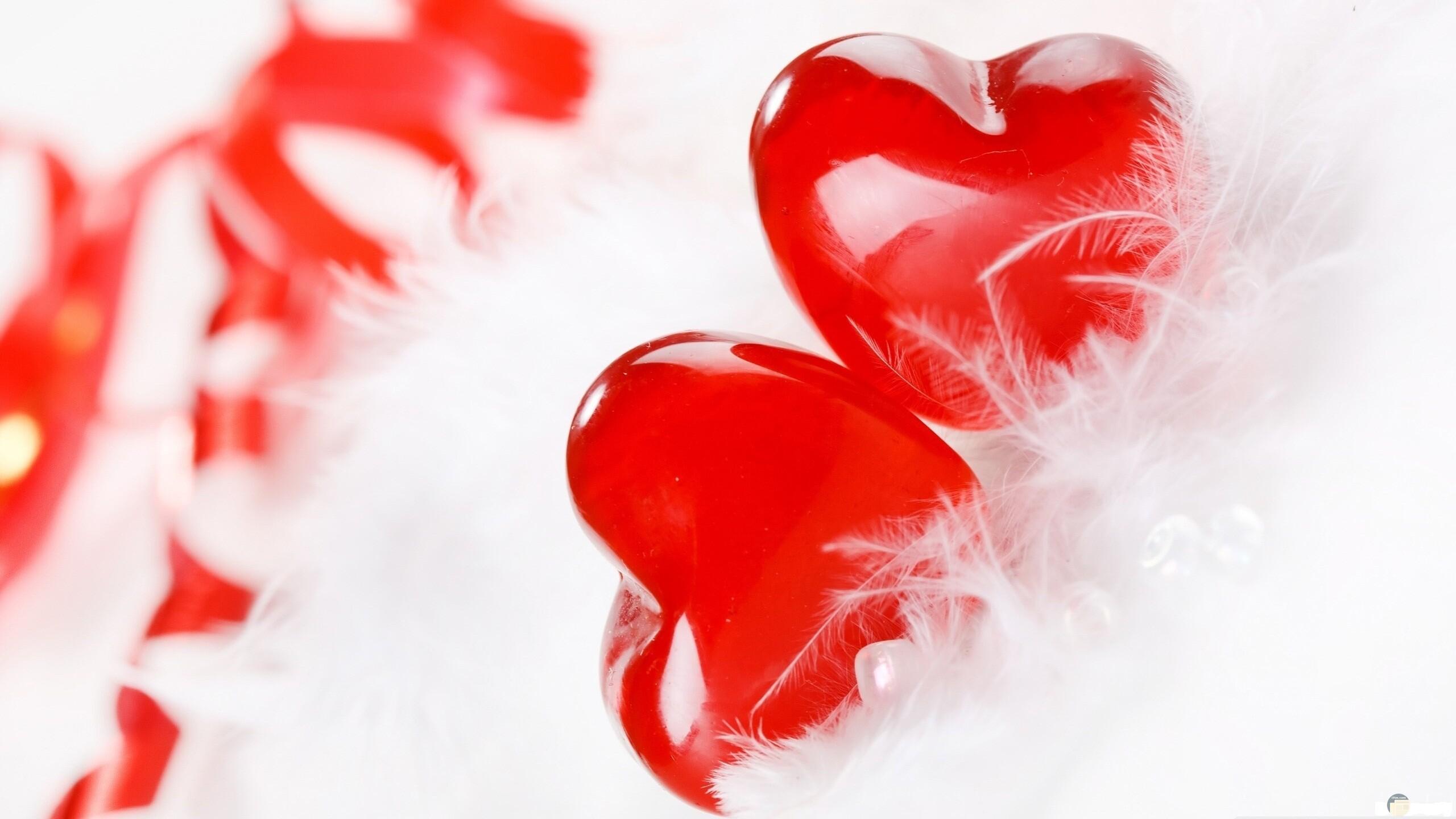 قلبين كيوت على فرو أبيض جميل.