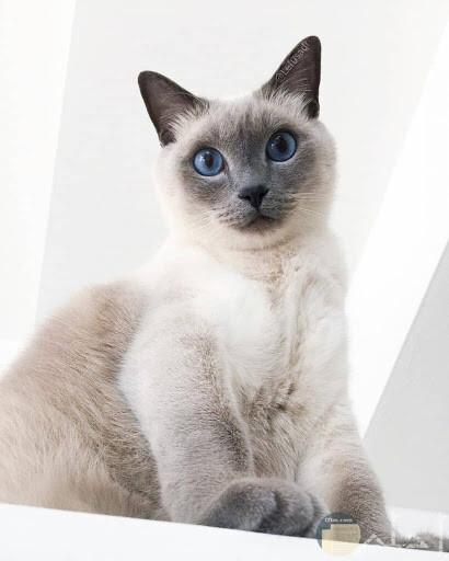 صور متنوعه للقطط