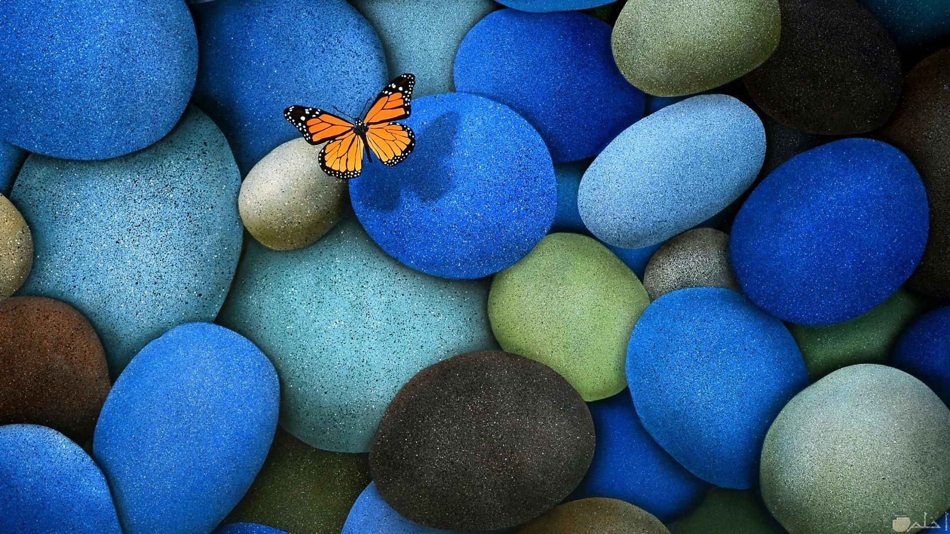 فراشة تقف على ظلط ملون بدرجات الأزرق.